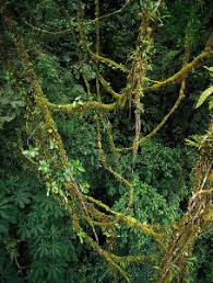 Dominant Plants Of The Tropical Rainforest - tropical rainforest population and community development and