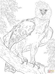 harpy eagle coloring page harpy eagle super coloring rainforest