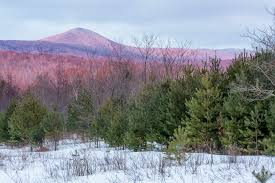 Vermont forest images Vermont is getting a new state forest northeast explorer jpg