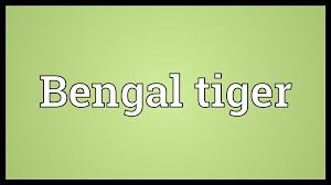 bengal tiger meaning