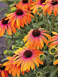 Pictures Of Gardens And Flowers 337 Best Landscaping Perennial Flowers Images On Pinterest