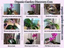 growing orchids indoors gardening advice with regard to how to