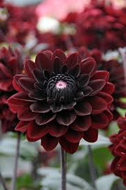 flowers images best 25 red flowers ideas on pinterest red wedding flowers red