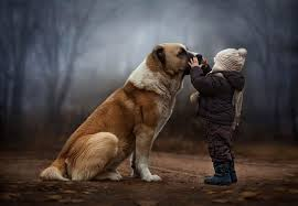 by elena shumilova 500px dogs pinterest animal and photography
