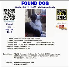 found dog flyer template lost and found cat flyer humane society