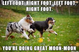 Encouragement Memes - introducing sunsun the encouragement dog meme on imgur