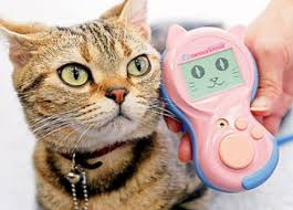 Gadgets For Pets Pet Tech 13 Goofy Gadgets For The Dogs U0026 Cats Urbanist