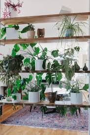 Cascading Indoor Plants by 762 Best Green Thumb Images On Pinterest Flowers Plants And Flower