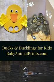 110 best nature crafts for kids images on pinterest nature