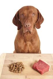 interview is the raw food diet for dogs a good choice for my pet