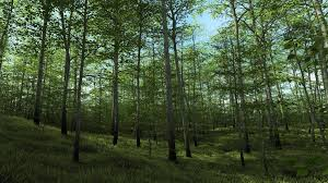 forest render harpwood county coming to daz studio now released commercial