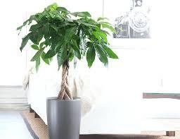 Best Plants For Bathrooms Astonishing Good Plants For Indoors Best Indoor Men Gear Patrol