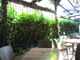 Create Privacy In Backyard by Tips For Creating Privacy In Your Patio Greenscape