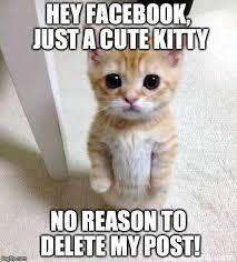 Meme Generator Imgflip - grumpy cat birthday meme generator cat best of the funny meme