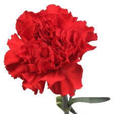 Wholesale Carnations Bulk Wholesale Carnations Las Vegas Nevada