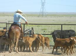 Tolar by New 400 Head Cattle Ranch Tolar Nm 064 000