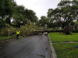 sunday coverage power out trees down as hurricane irma bears