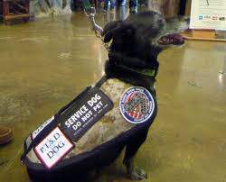 new breed of service dog helps veterans with ptsd december pet