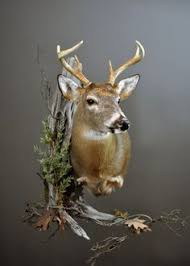 Deer Pedestal This Is A Custom Made Deer Mount That I Sell Local And Just