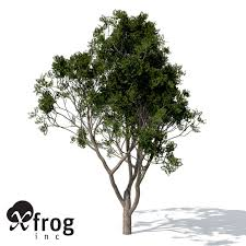 3d xfrogplants chinaberry tree cgtrader