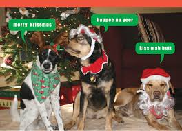 hilarious dog christmas cards chrismast cards ideas