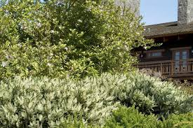 shrubs and trees fall is the time to add them to your landscape