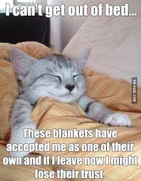 Nighty Night Meme - pin by penny decuir on memes pinterest funny animal pictures and