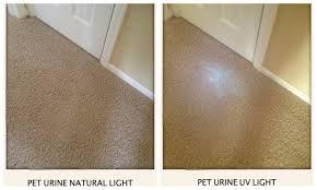 Laminate Floor Smells Musty Senior Living Smart