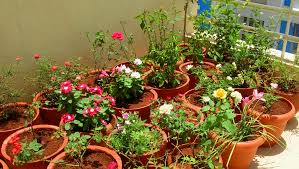 flower gardening 101 tips to create a perfect flower garden flowers blog flower garden