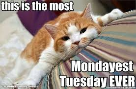 Tuesday Meme - this is the most mondayest tuesday ever tuesday pinterest