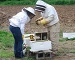 Πώς να ξεκινήσετε στην Μελισσοκομία | Το καλαθάκι μας