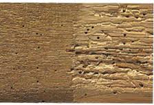 Powder Post Beetles In Hardwood Floors - woodworm treatment find more on treatment for woodworm