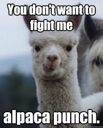 Funny Fight Memes - you don t want to fight me alpaca punch alpaca quickmeme