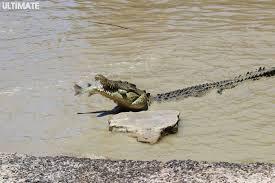 bartender resume template australia zoo crocodile feeding videos ultimate blog australia ultimate travel