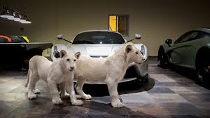 the ultimate man cave white lions and supercars