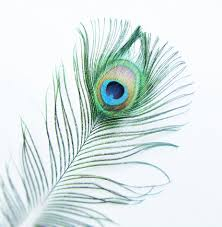 interior accessories for home accessories endearing image of beautiful color peacock feather as