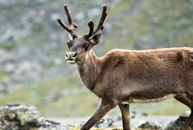 reindeer eyes change color match season smart