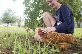 Chicken In Backyard Patting Chicken In Backyard