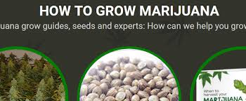 Best 25 Marijuana Grow Lights by The 25 Best Grow Websites I Love Growing Marijuana