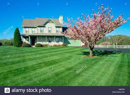 flowering tree in large front yard of two story frame house with