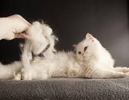 how to deal with cats and shedding cattime