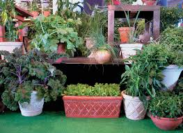 outdoor and patio fabulous container gardening vegetables over