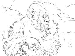 coloring page of gorilla mountain gorilla coloring page free printable coloring pages