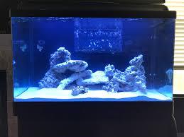 Floating Aquascape Reef2reef Saltwater And Reef Aquarium Forum - wareagle88 u0027s rsm 250 reef2reef saltwater and reef aquarium forum