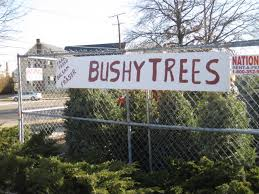 best places to buy a christmas tree in cambridge ma centers and