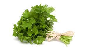 herbe cuisine le persil l herbe aromatique par excellence