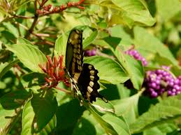 florida native plants list florida native plant society blog september 2010