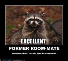 Evil Raccoon Meme - evil plotting raccoon meme evil plotting raccoon pinterest