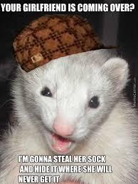 Ferret Meme - scumbag ferret by austinifighter meme center