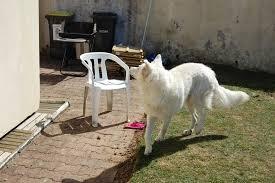 comment empecher chien de monter sur le canapé mon chien ne monte pas la garde chiens
